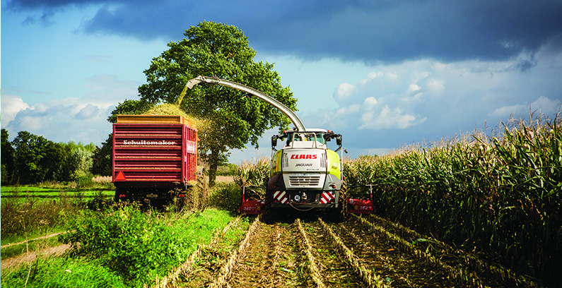 Understanding Mycotoxins and Predicting Risk in a Changing Climate